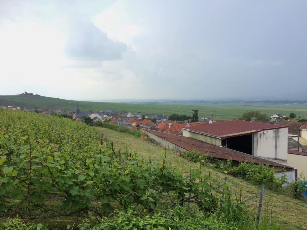 tasting terrace overlooking the vineyard