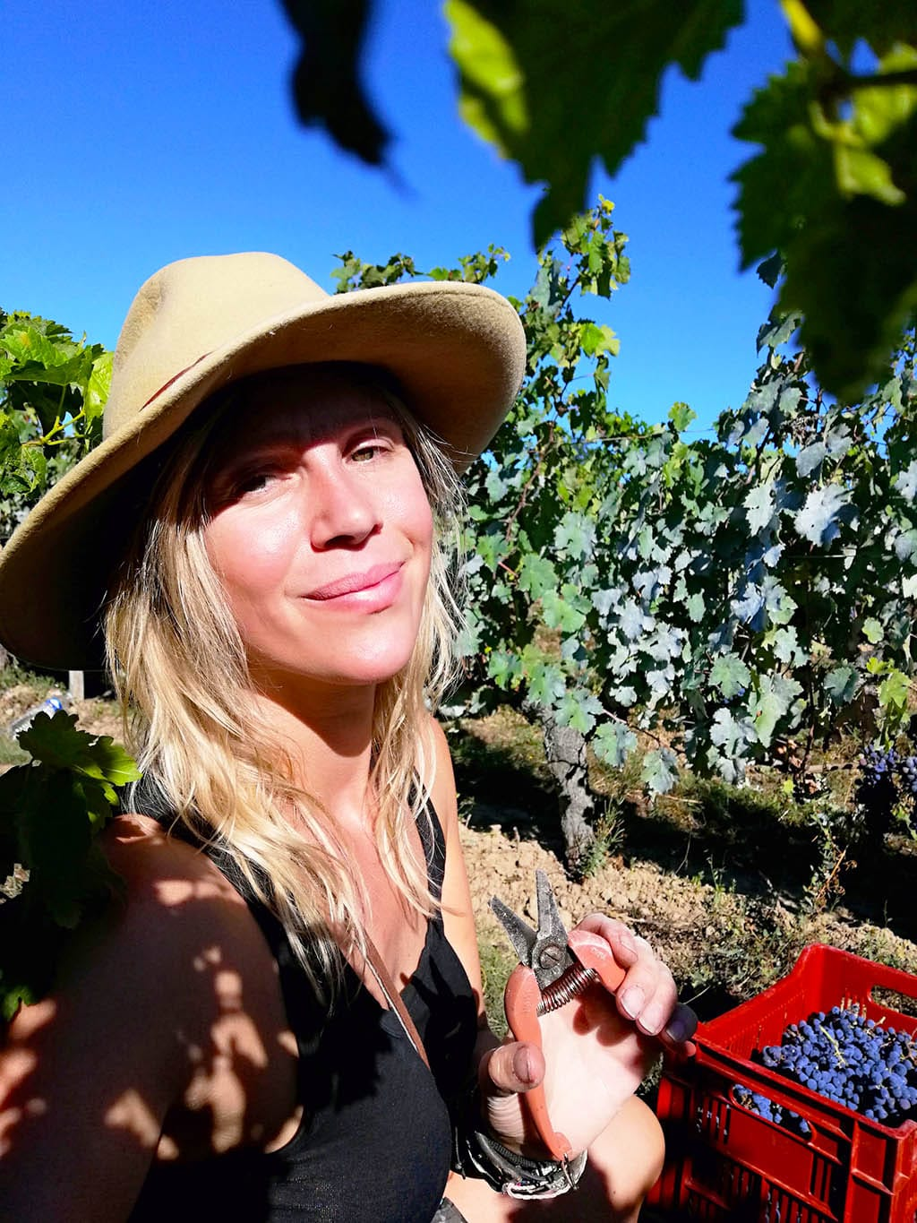 Loes doing grape harvest