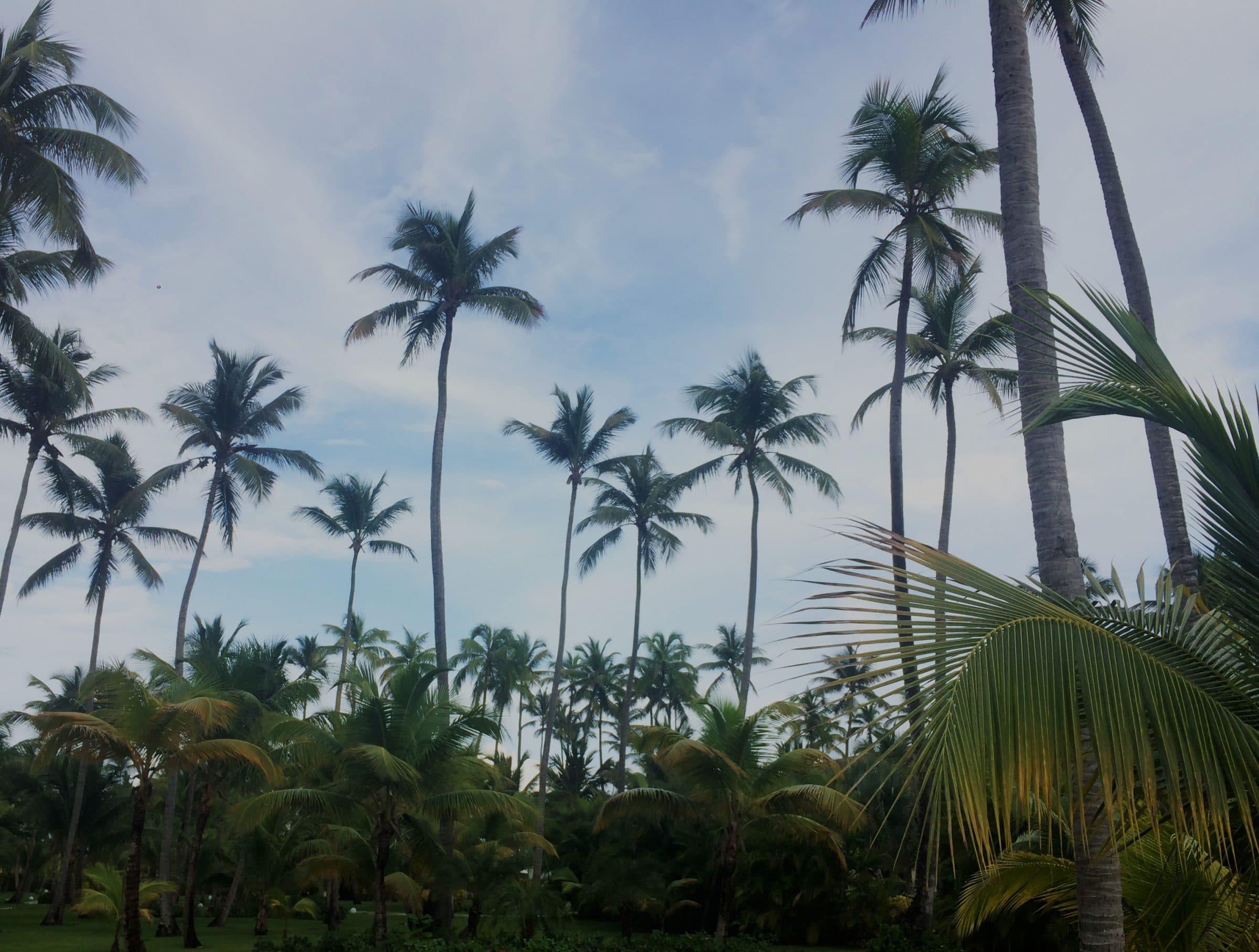 Palmbomen Punta Cana