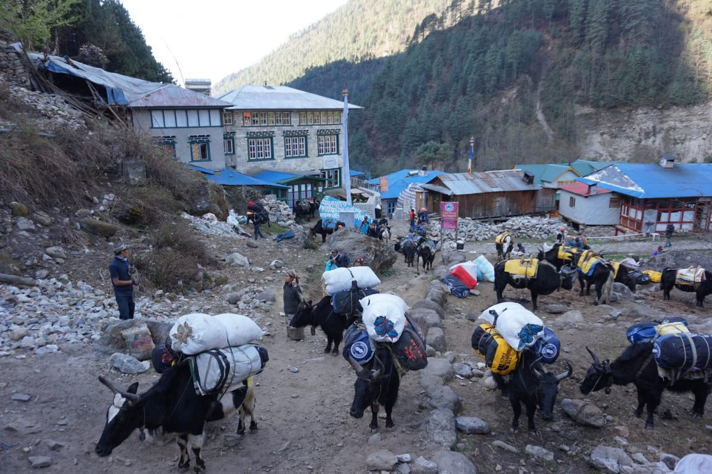 Mount Everest base camp trekking with yak transport