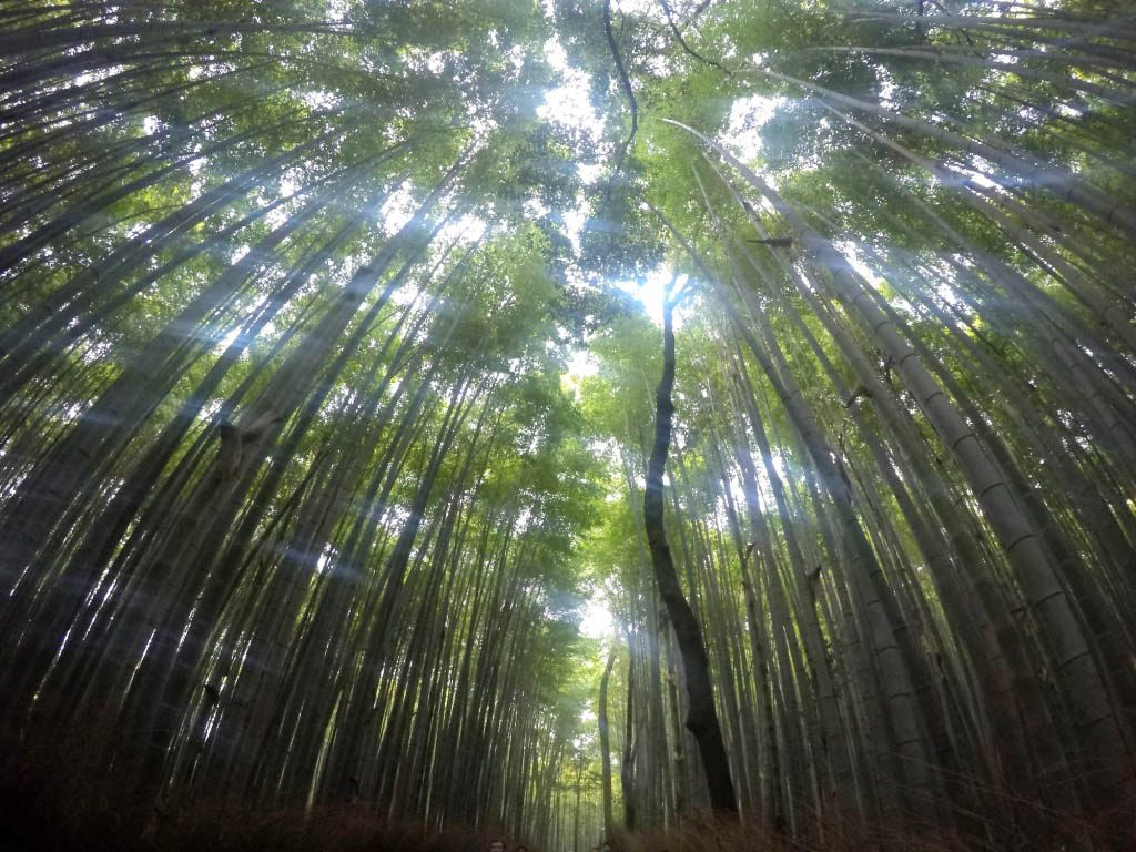 Arashiyama bamboo forest, on of the reasons to visit Japan