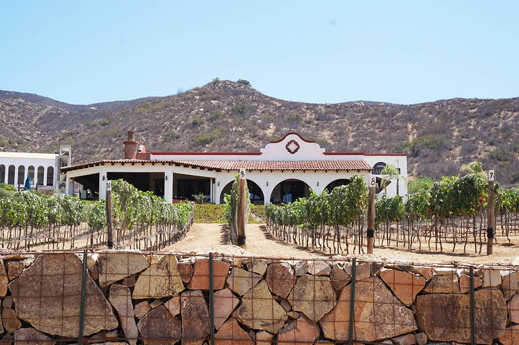 The vines and restaurant of Hacienda Guadalupe