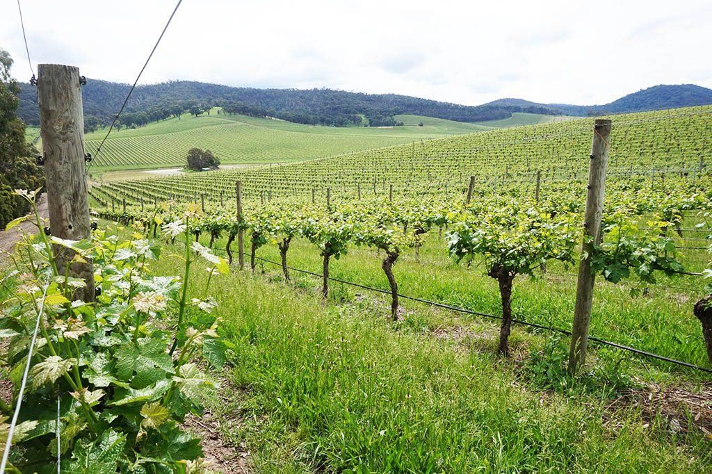 Best wineries in Yarra Valley