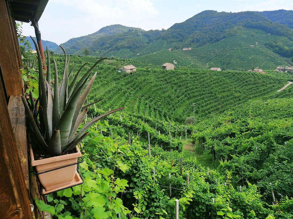 Trattoria Ristoro Fos de Marai for lunch with vineyard views