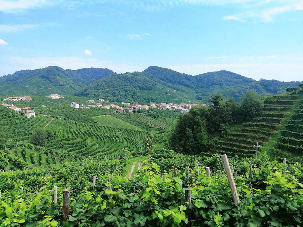 View across the prosecco vines