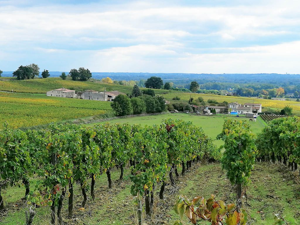 Overlooking chateau gaby vines